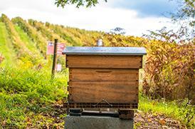 Les ruches du Domaine de la Soucherie